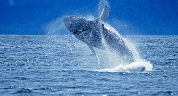 Monterey Bay Whale Watch at California