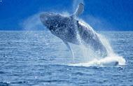 Monterey Bay Whale Watching Tour Package