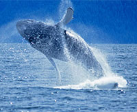 Whale Watching Tour at Monterey